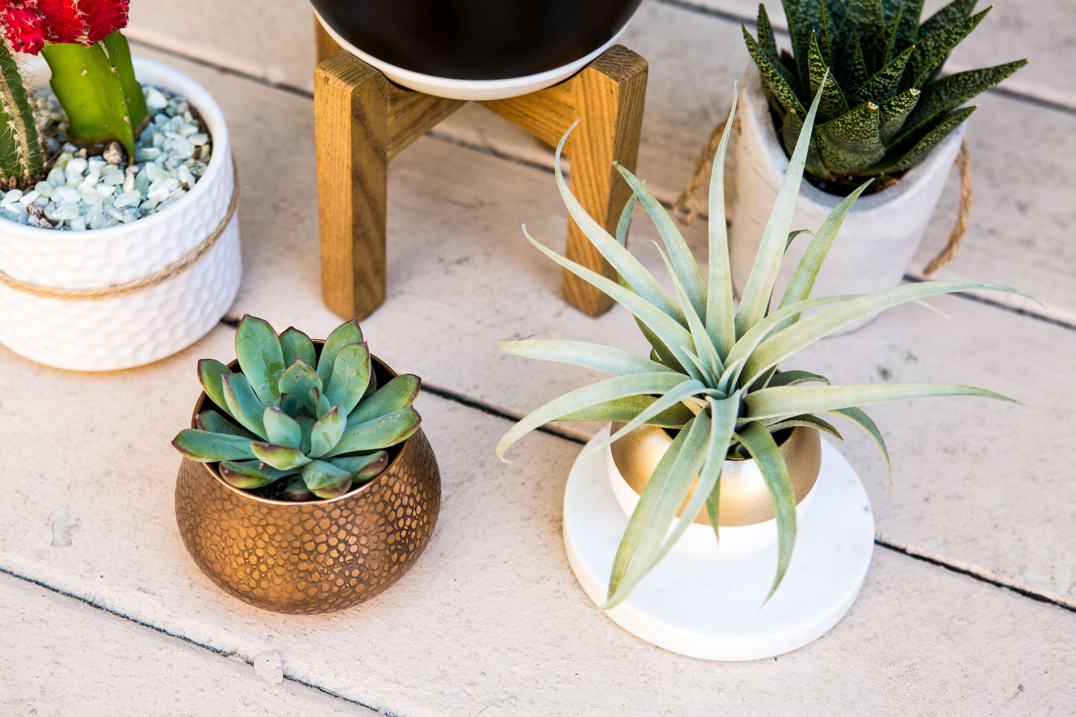 Home Decor Plants Home Decor The Best Indoor Plants Live The Nekter Life