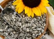5 σπόροι που πρέπει να προσθέσετε στη διατροφή σας
