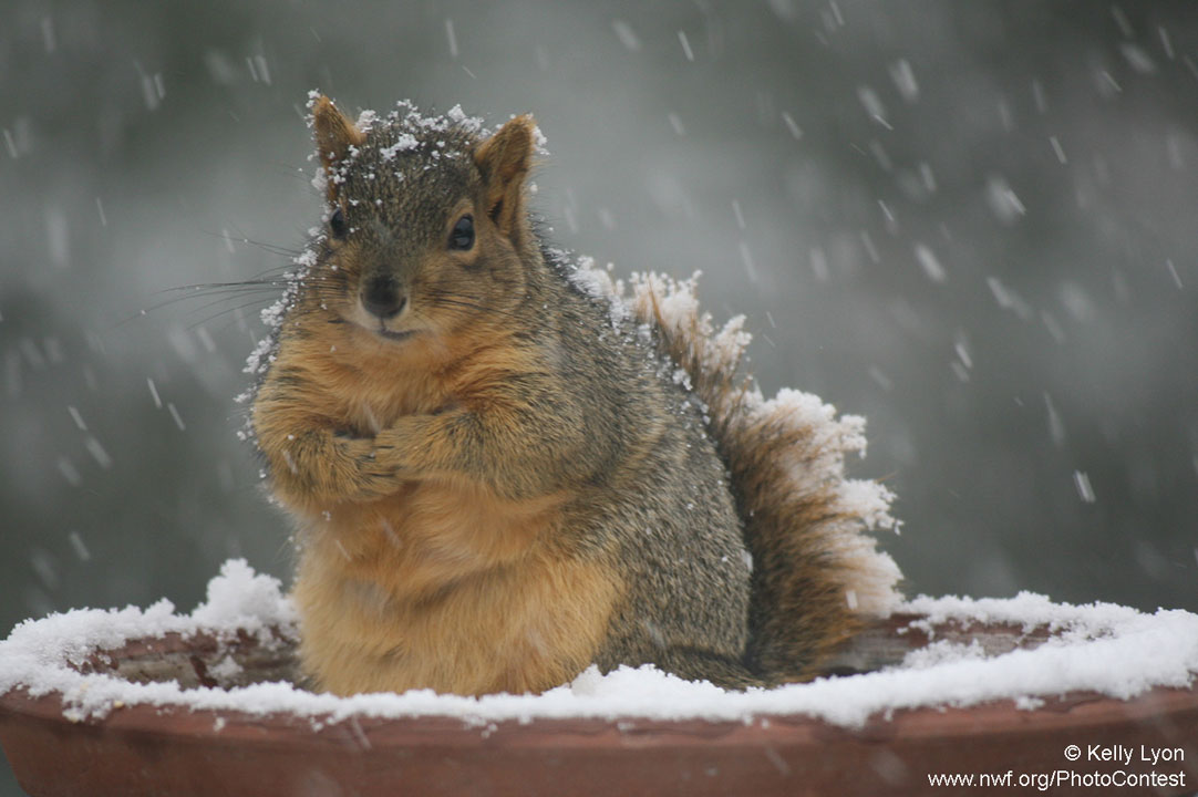 Latest Cute Baby Wallpaper 10 Nutty Facts To Make You Appreciate Squirrels The