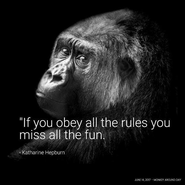Gorilla Glance By Jasper Dalgliesh