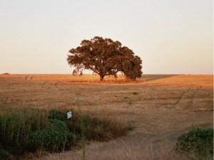 PIC_1_isolated_oak