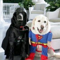 6 Pet Halloween Costumes - Ideas for Your Puppy & Dog ...