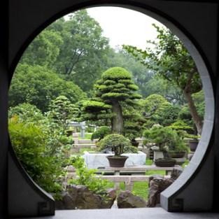 Bonsai Garden - Suzhou - China