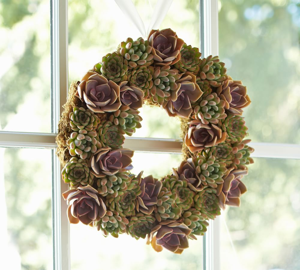 decorating with succulents pottery barn. Black Bedroom Furniture Sets. Home Design Ideas