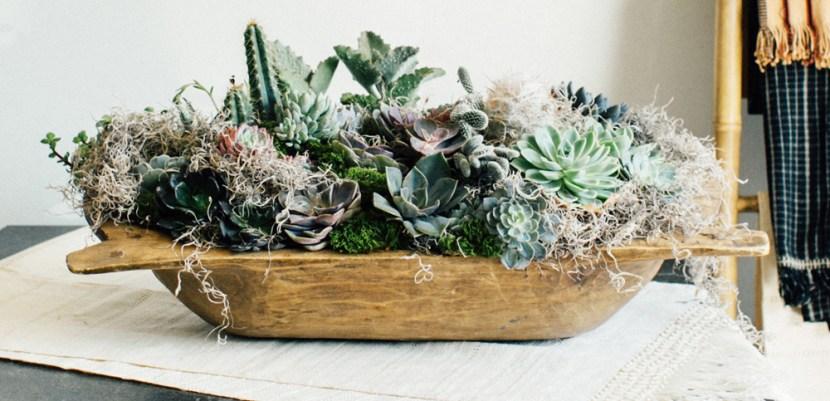 How To Create Unique Succulent Arrangements