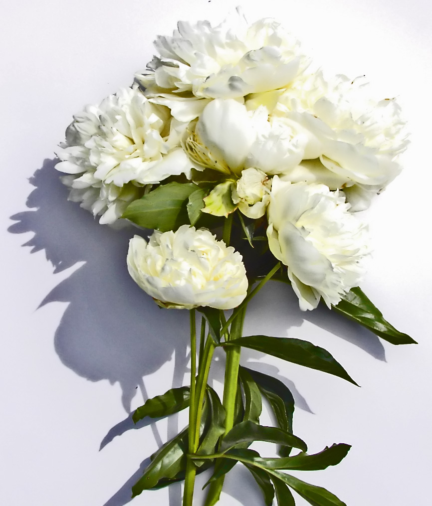 Pianese Flowers Caring Tips For Your Peony Bouquet Flower Press