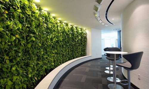 Medium Of Vertical Gardens Walls