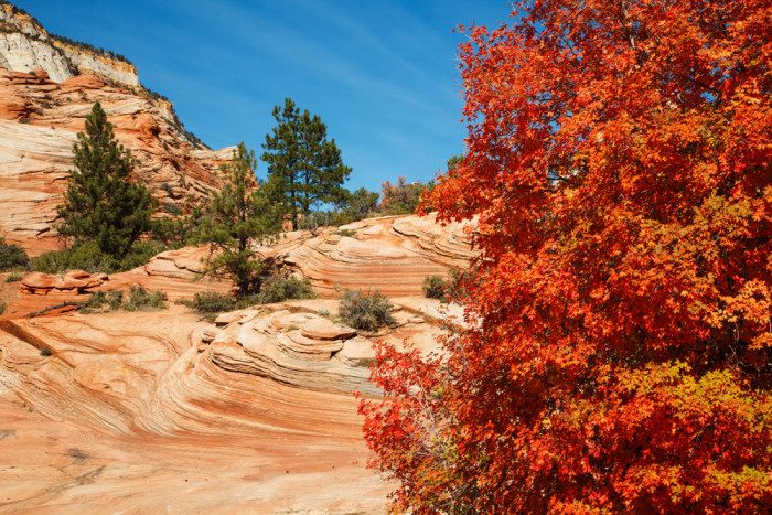 Fall Leaves Wallpaper Border The Top 10 Fall Rv Destinations In The U S