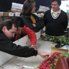 Tom Royer regularly visits South American farms to check on the flowers that are grown specifically for Royer's Flowers.