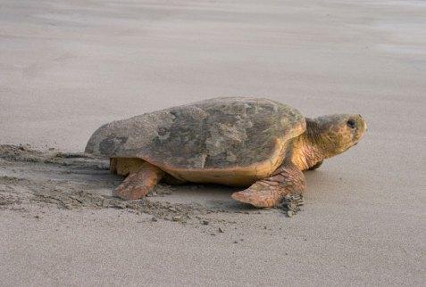 Track turtles in Kosi Bay