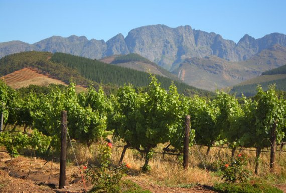 Wine Routes of the Cape