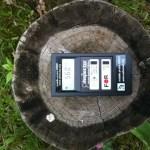 tree stump 560