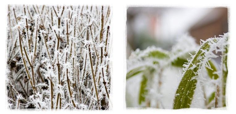 Winter_Season_www.SIGNUM7.com_1