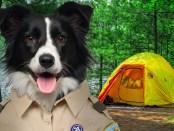 PuppyScout4