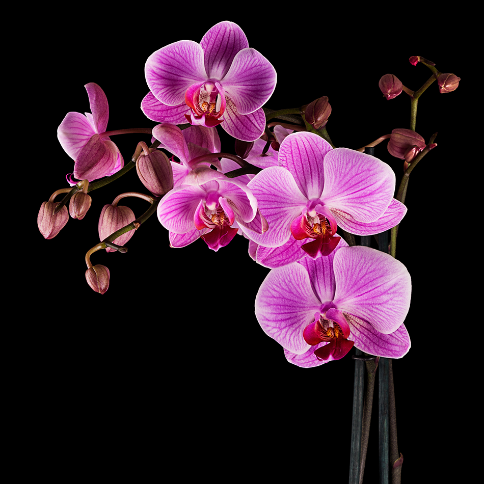 The Yellow Wallpaper Important Quotes How To Care For Orchids Pollen Nation
