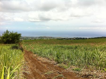 Ile de la Réunion - janvier 2011 - 519