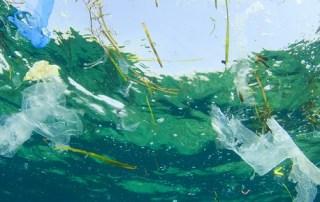 Nos comemos nuestros residuos plásticos