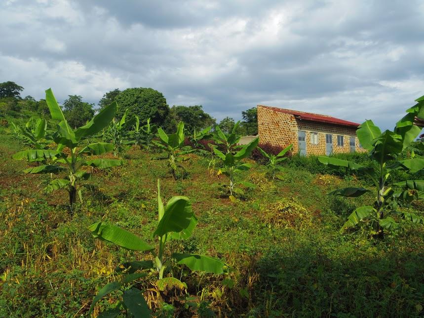 バナナの木が目立ちますが、他にも様々な野菜やフルーツが育てられています、奥に見えるレンガ造りの建物がスタッフの住居
