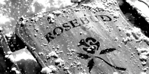 Rosebud still