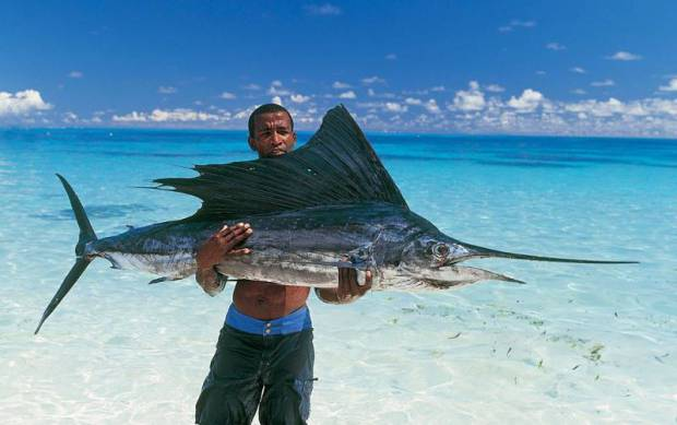 Black Marlin, Deep Sea Fishing in Seychelles