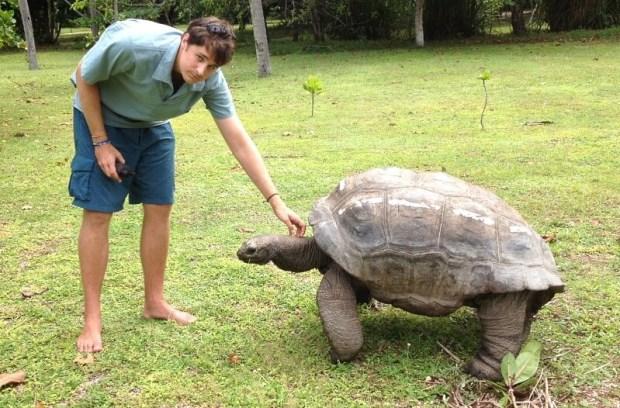 Giant Tortoise Monitoring Seychelles. I.C - wildlifeact