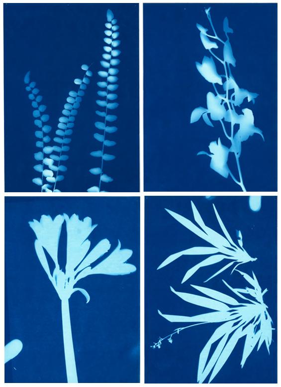 botanical floral sun print