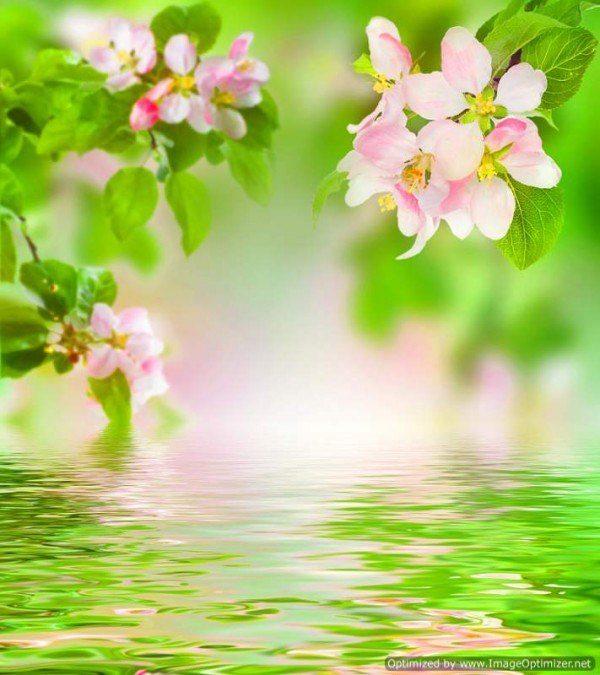 bigstock-Spring-12561803