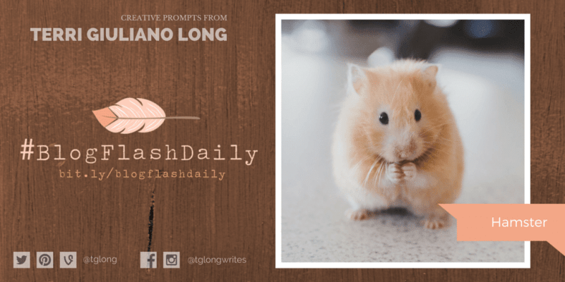 #BlogFlashDaily Writing Prompt: Hamster