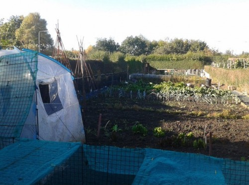 Guest blogger - Steve Woodward - The allotment with high hedges on all sides