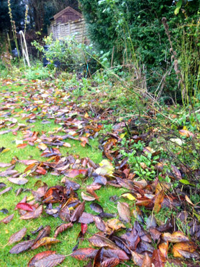 Guest blogger Michelle Storm - Leaf fall