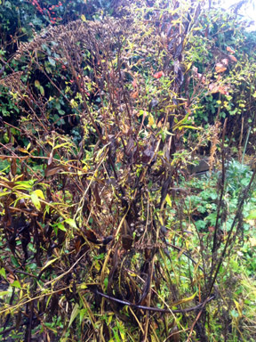 Guest blogger Michelle Storm - Perennial Stalks
