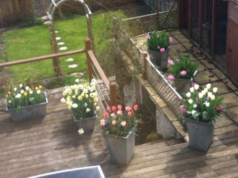My spring garden
