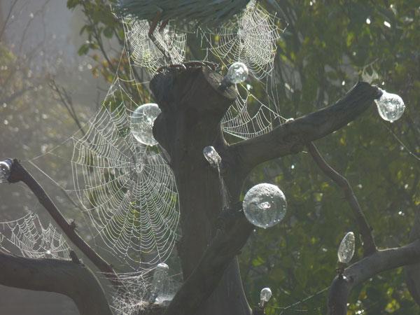 winter cobwebs