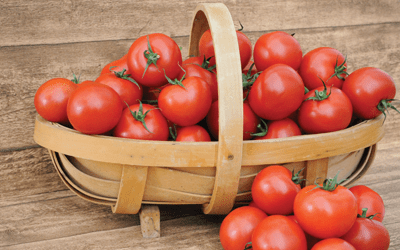 Thompson & Morgan tomato trials reveal sweet secret