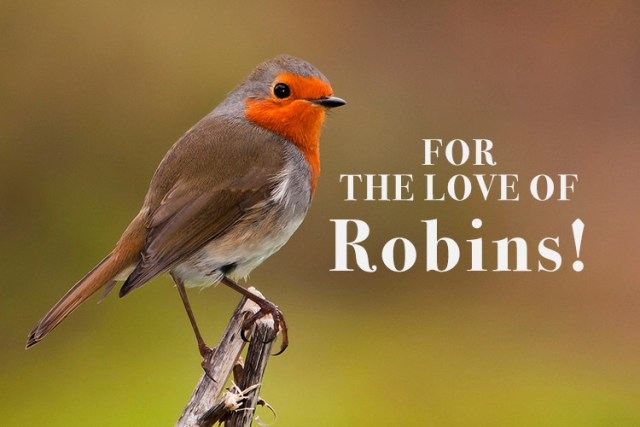 TJC-Blog-Robins