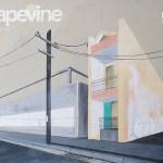 Grapevine-28