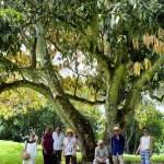 Enjoying the shade of this big tree