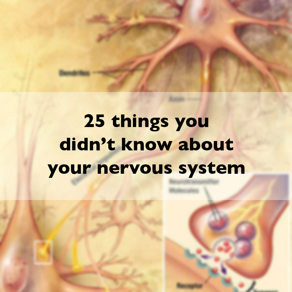 25 things you didn't know about your nervous system