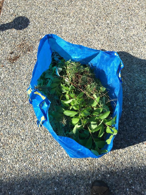 A blue IKEA bag sits about 2/3rds full of pulled weeds
