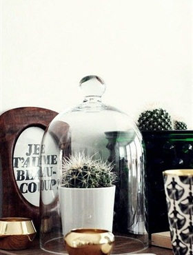 Prickly cactus under a glass cloche