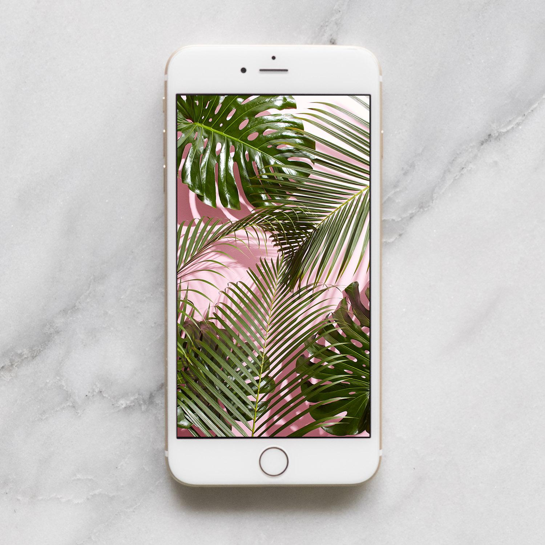 Cute Boston Terrier Wallpaper Tropical Leaves Mobile Desktop Wallpaper Download