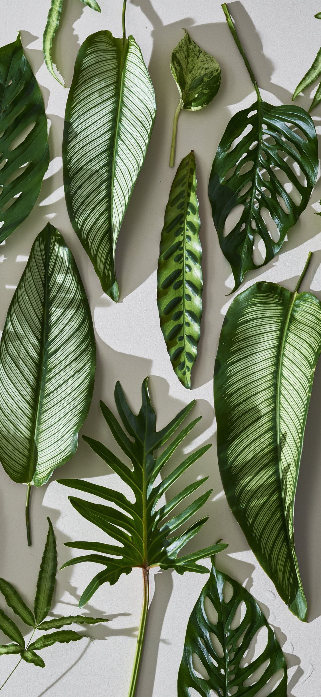 Black And White Wallpaper Decor Freshen Up With This Tropical Leaf Mobile Wallpaper