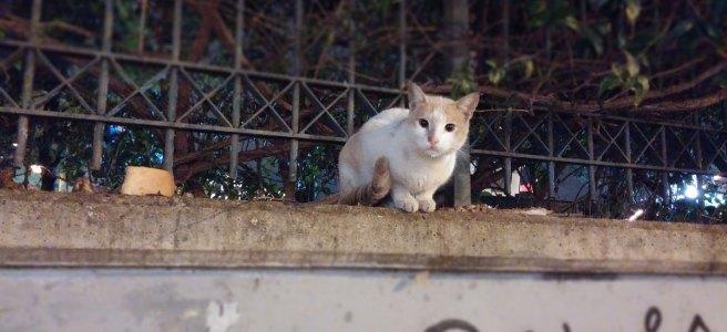 cats-athens