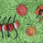 Centipedes and Millipedes from CANDY CONSTRUCTION