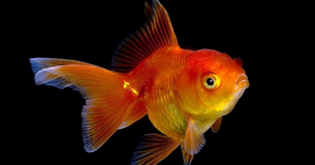 Home decor 8 beautiful aquarium fish for beginners for 104 7 the fish