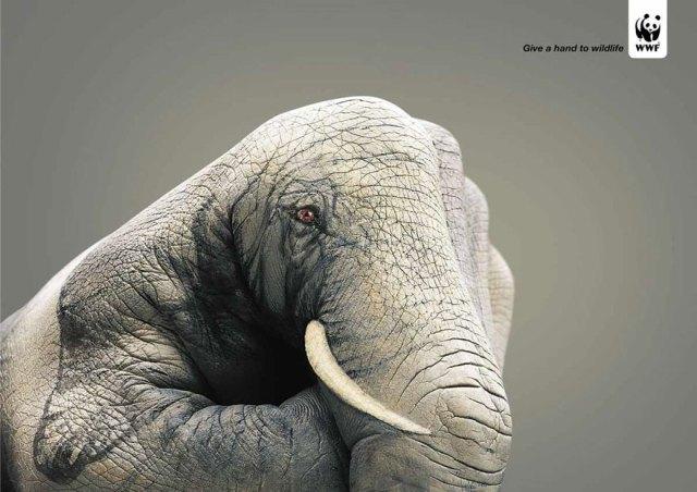Da una mano a la fauna