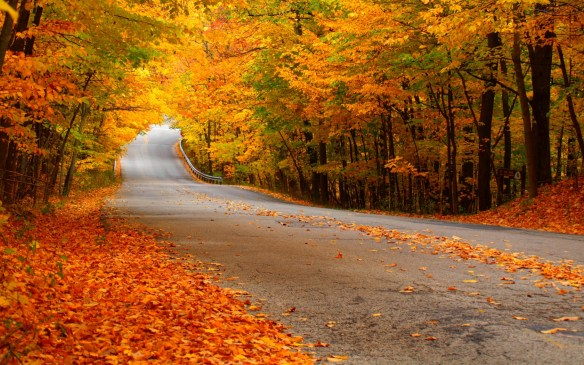 autumn_leaves_on_the_road