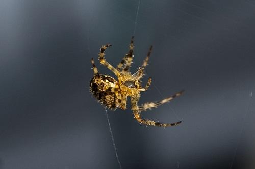 Just Hanging Around _ Flickr - Photo Sharing!-miguel-villegas-fundacion-arquia