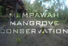 Mempawah Mangrove Conservation
