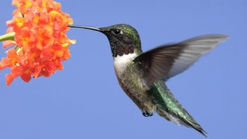 Get the Buzz on What Hummingbird Means for Small Business Owners